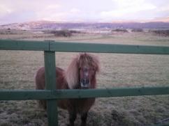 pony on snowdon